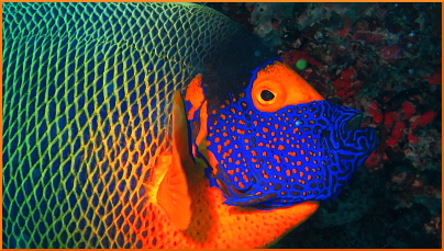 Facesvideo